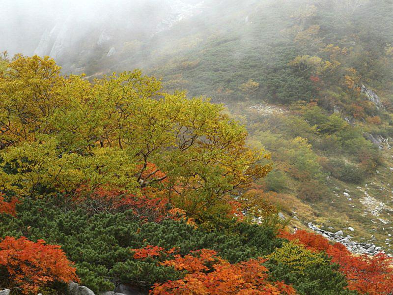 木曽駒-13 [800x600].jpg