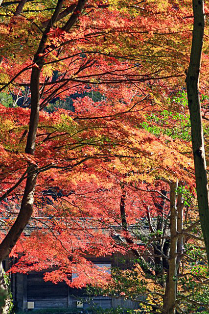 higashiyama-01 [640x480].JPG