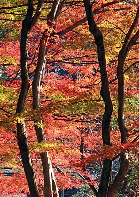 higashiyama-02 [640x480].JPG