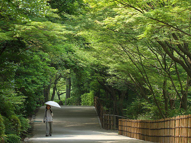 higashiyama-1 [800x600].jpg