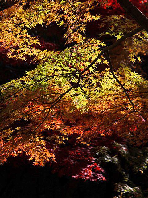 higashiyama-13 [640x480].JPG