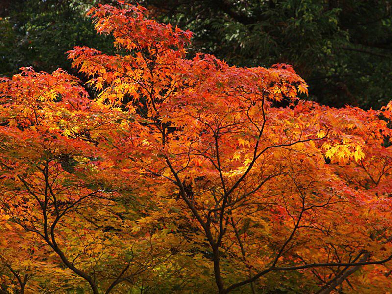 higashiyama-13 [800x600].jpg