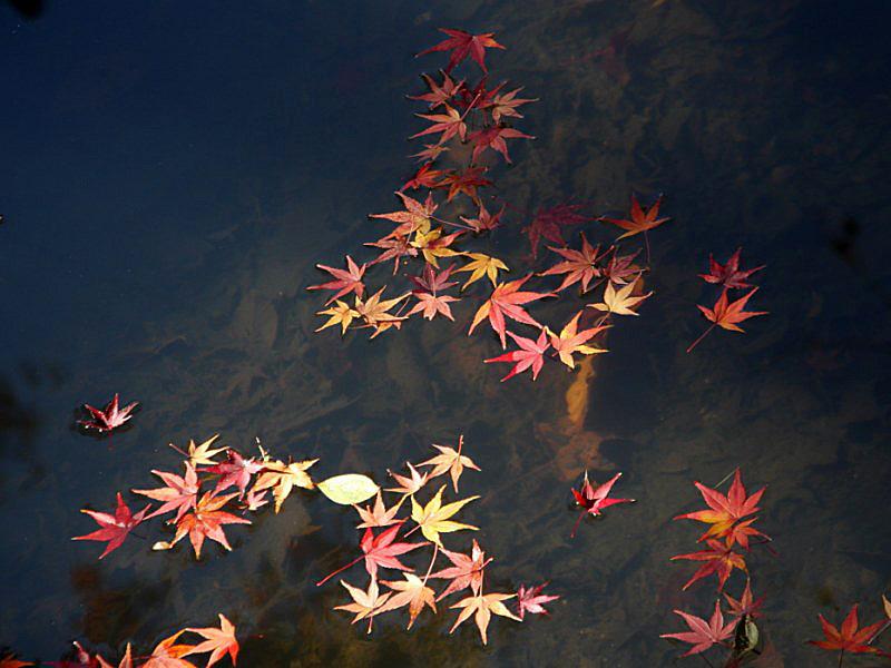 higashiyama-14 [800x600].jpg