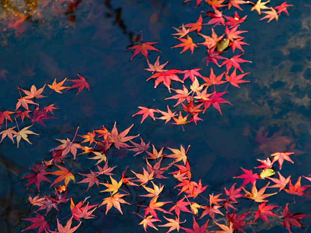 higashiyama-15 [640x480].JPG
