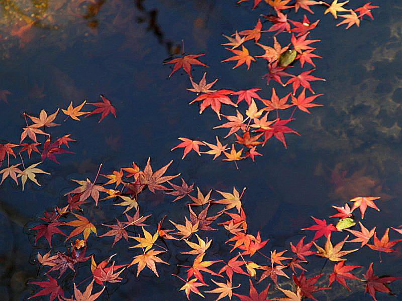 higashiyama-15 [800x600].jpg
