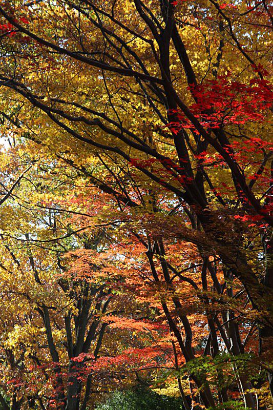 higashiyama-17 [800x600].jpg