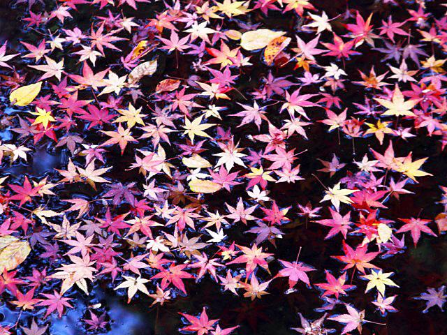 higashiyama-20 [640x480].JPG
