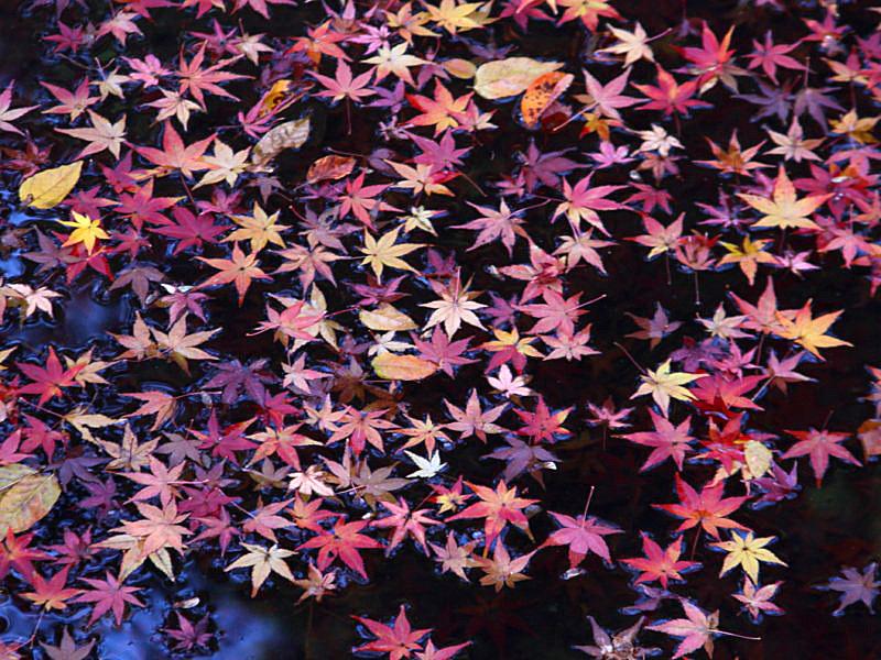 higashiyama-20 [800x600].jpg