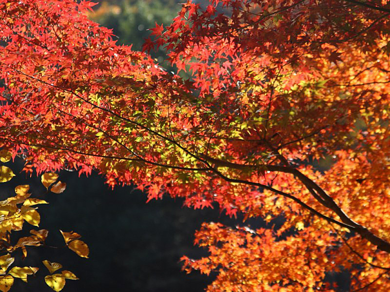 higashiyama-2 [800x600].jpg