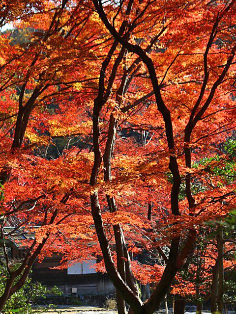 higashiyama-4 [640x480].JPG