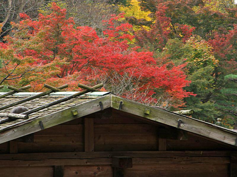 higashiyama-4 [800x600].jpg