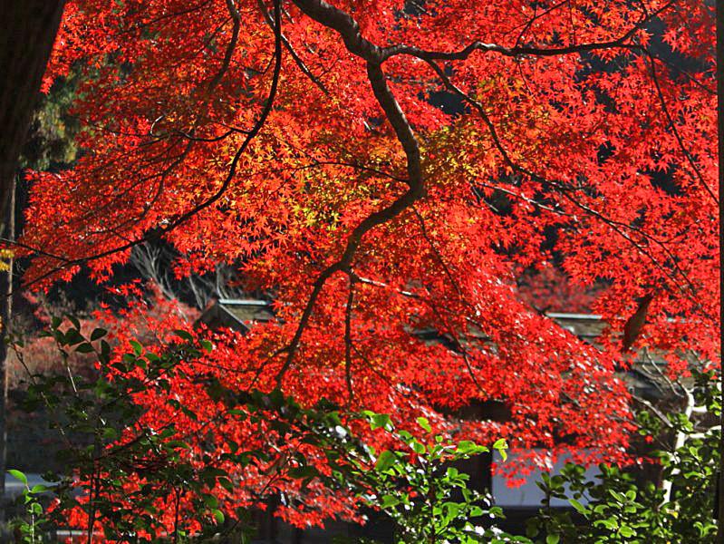 higashiyama-6 [800x600].jpg