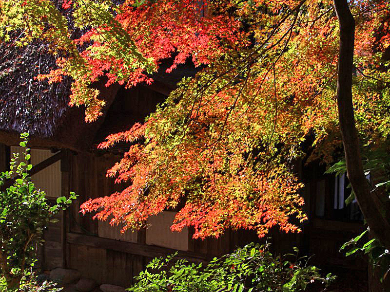 higashiyama-8 [800x600].jpg