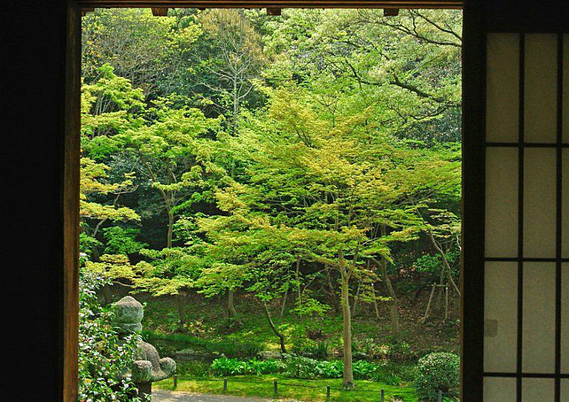 shinryoku-4 [800x600].jpg
