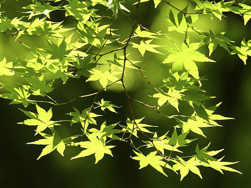 sinryoku-4 [800x600].jpg