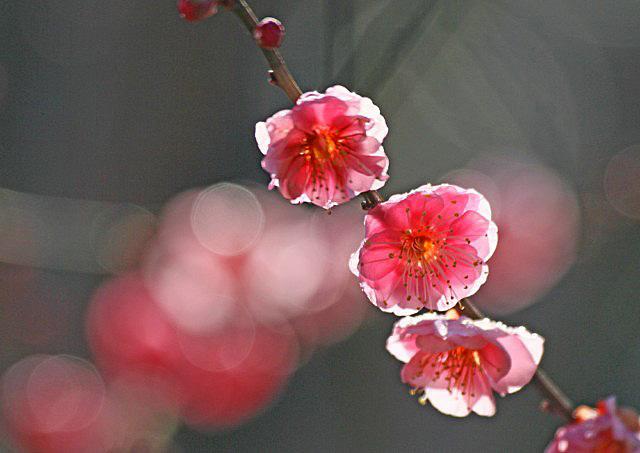 yaekankou-2 [640x480].JPG